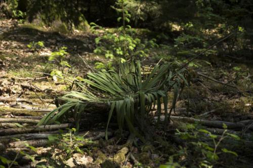 Flechtwerk Verflechtung Landart im AHrdwald Opfikon